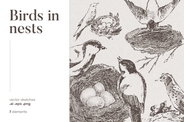 Collection of birds drawings example image 1