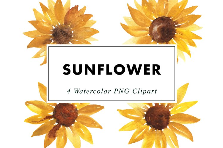 Sunflower Illustrations Watercolor | Clipart PNG