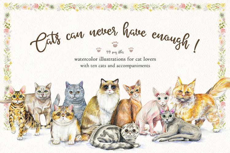 Cats can never have enough! example image 1