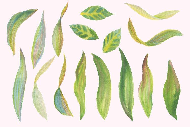 Floral Design Pack (watercolor & pastel) - Free Design of The Week Design8