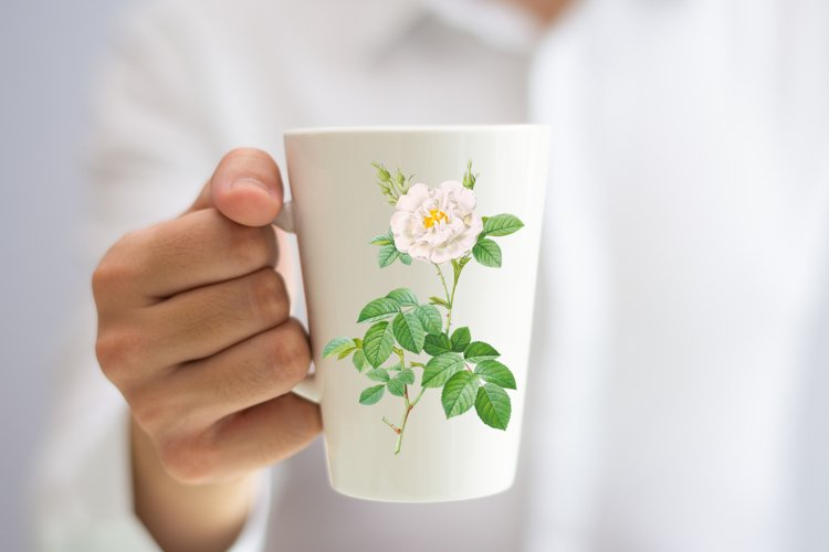 White Vintage Flowers, Botanical IlIustration, Vintage Rose example image 1