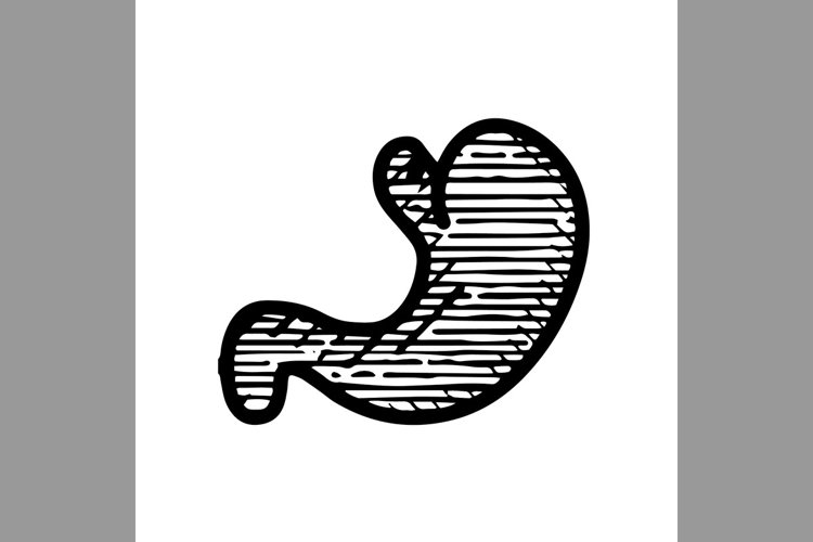 hand drawn stomach symbol line icon, Vector Illustration example image 1