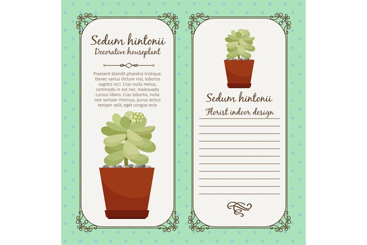 Vintage label with sedum hintonii plant example image 1