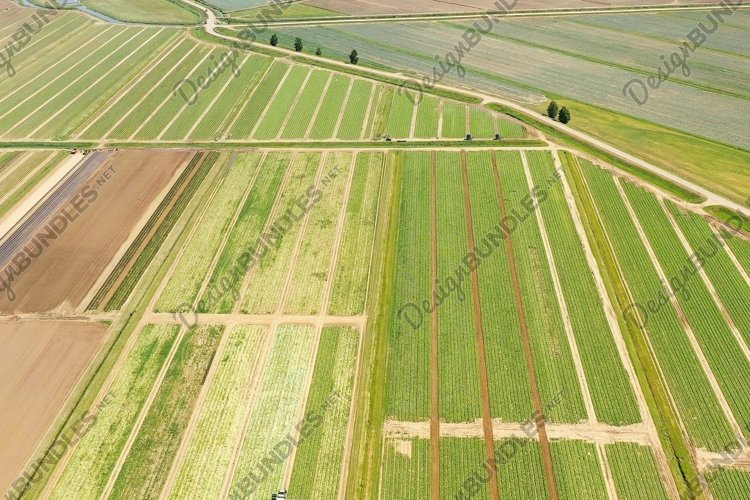 Agricultural land with green crops from above example image 1