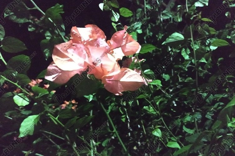 beautiful paper flowers at night example image 1