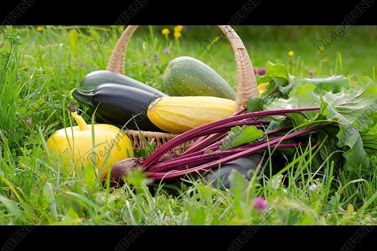 Harvest of vegetables placed in a basket. Banner. example image 1