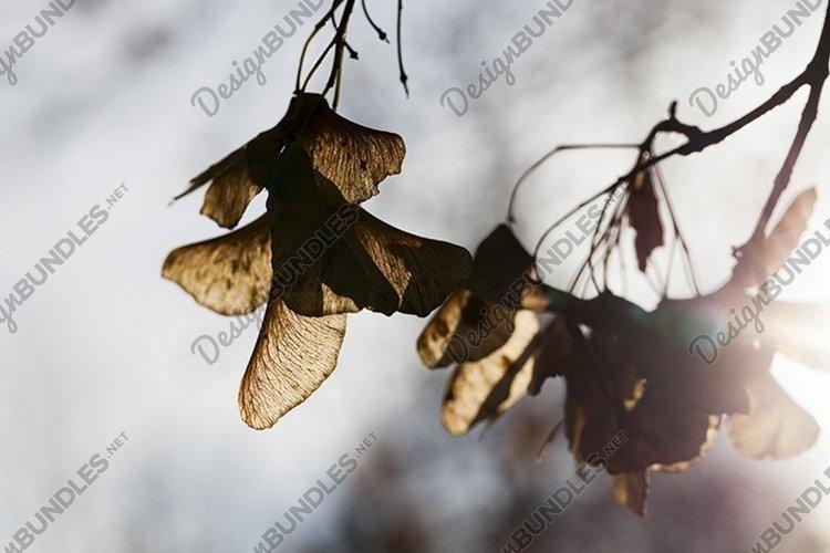 autumn nature example image 1