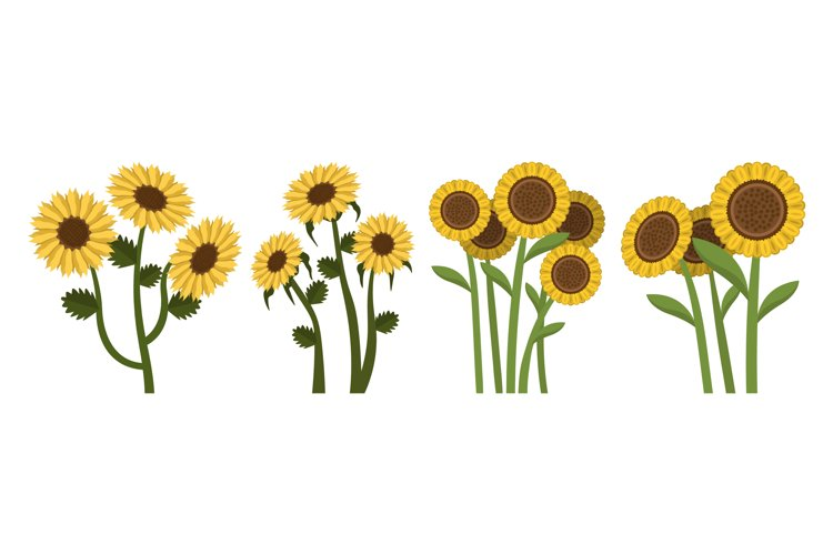Sunflower Illustrations