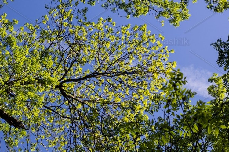 the top of green trees seen from below example image 1