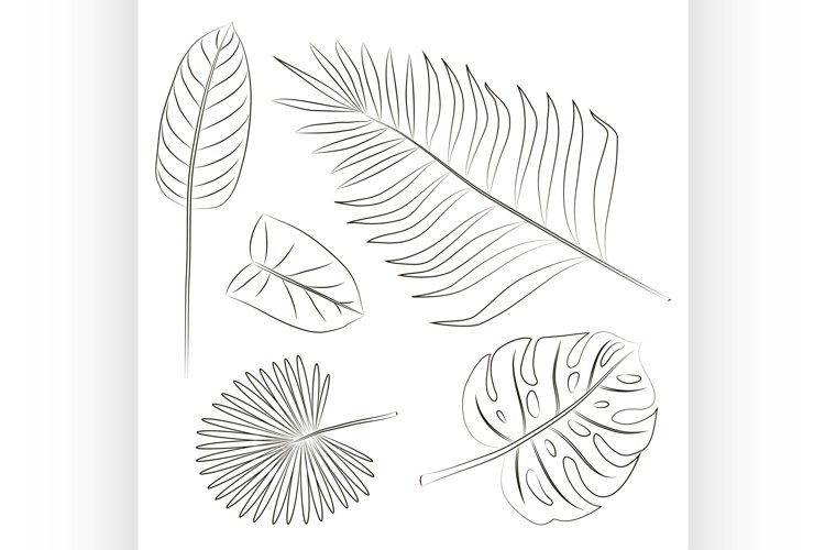 Vector tropical leaves set example image 1