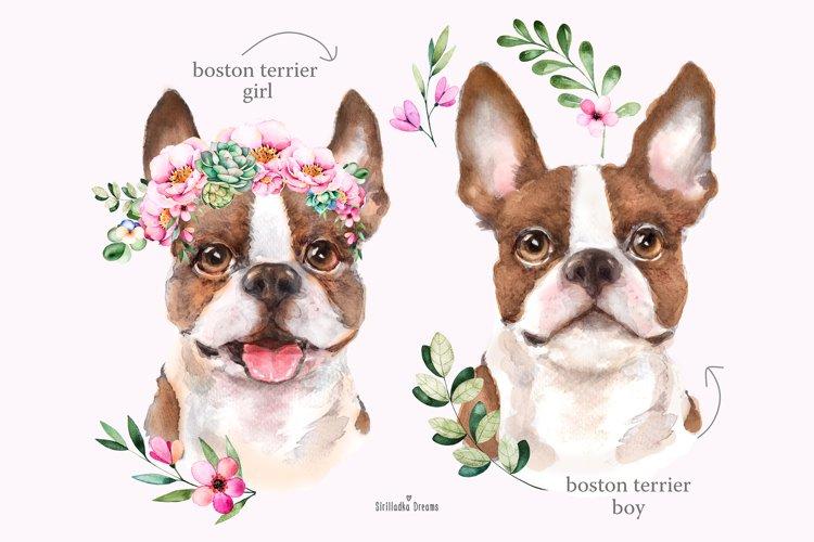 Boston terrier portrait, watercolor dog, dog clipart