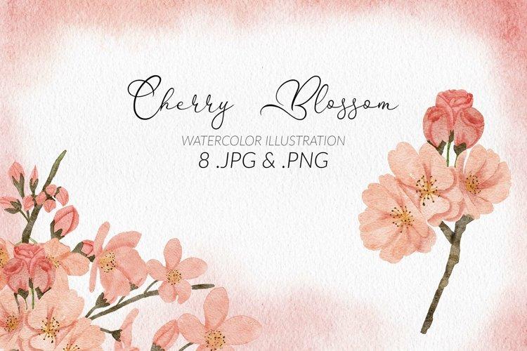 8 Watercolor Cherry Blossom Flower Illustration Set