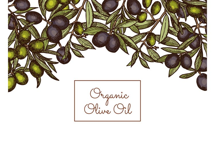 Vector illustration with place text and hand drawn olive example image 1