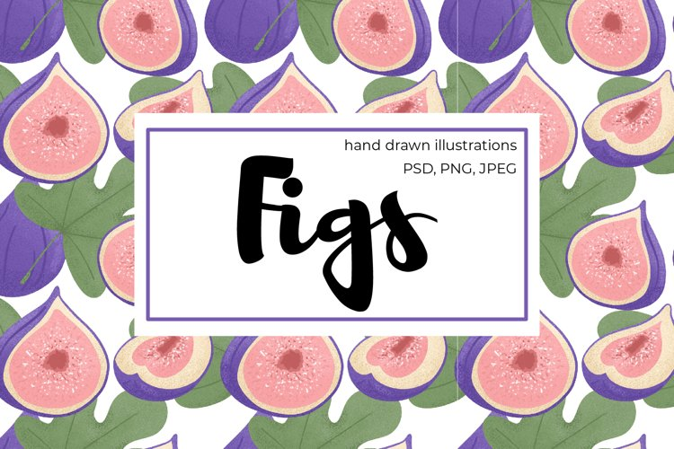 Figs hand drawn clip art example image 1