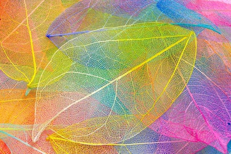 Rainbow skeleton leaf with beautiful texture. leaf veins. example image 1