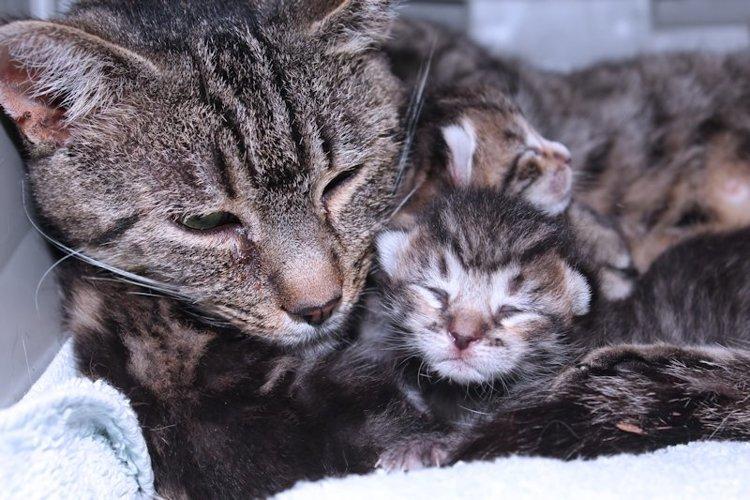 MAMA & BABY KITTEN example image 1