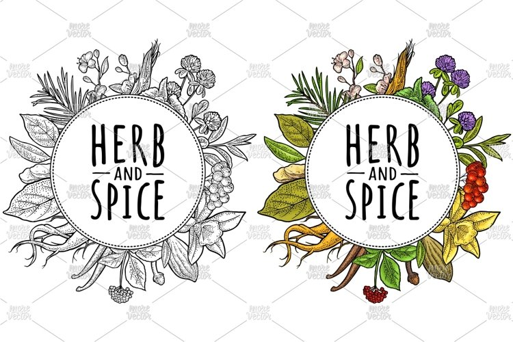 Circle shape Herb and spice. Vector vintage engraving example image 1
