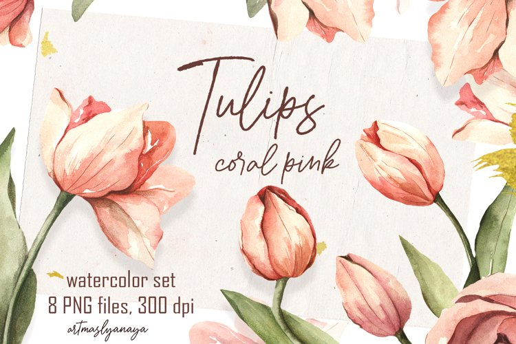 Watercolor clipart coral pink Tulips. Floral digital set PNG