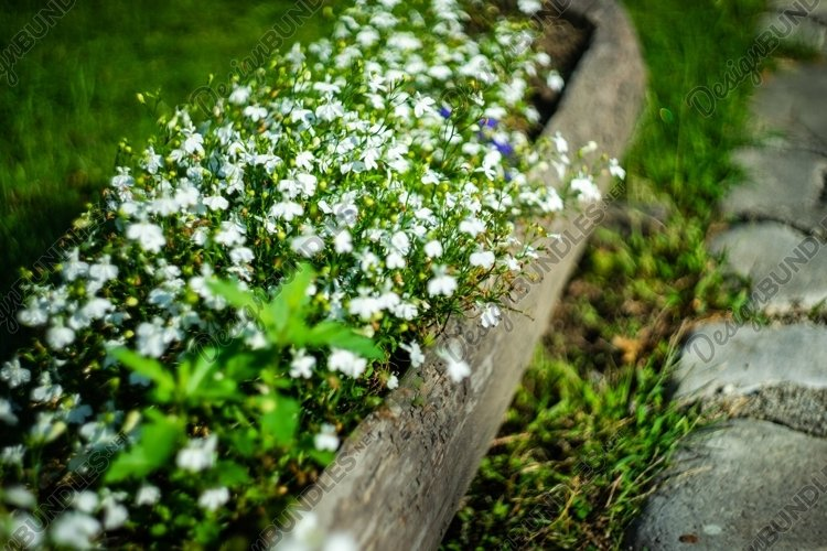 White bell flowers in a park example image 1