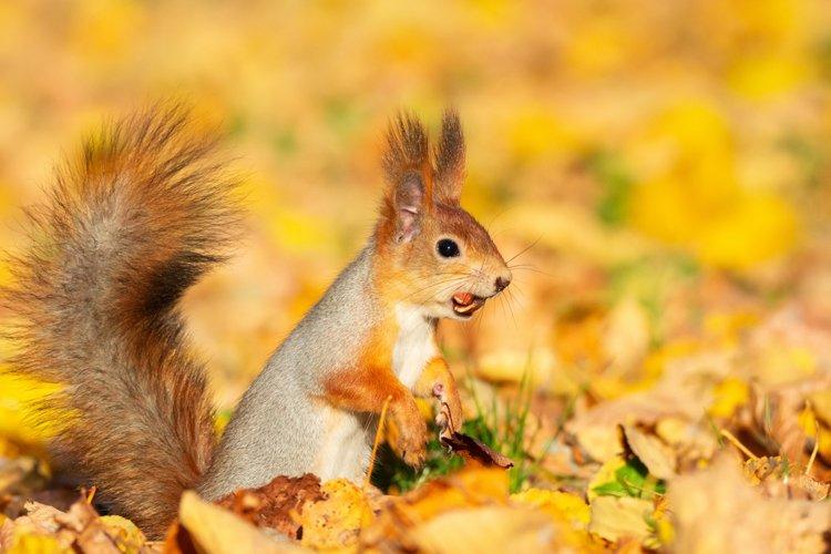 squirrel in autumn Park example image 1