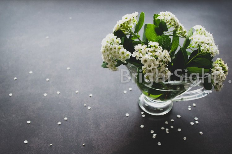 Spirea white flowers example image 1