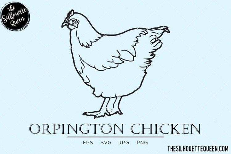 Orpington Chicken Vector