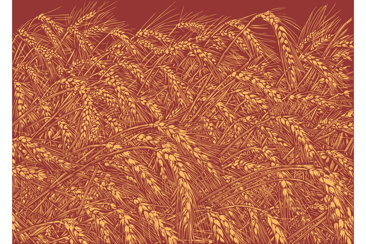Wheat field. Hand drawn illustration. Vector engraving. example image 1