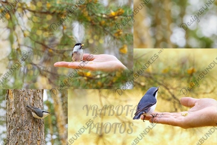 Little birds nuthatch and tit at autumn time example image 1