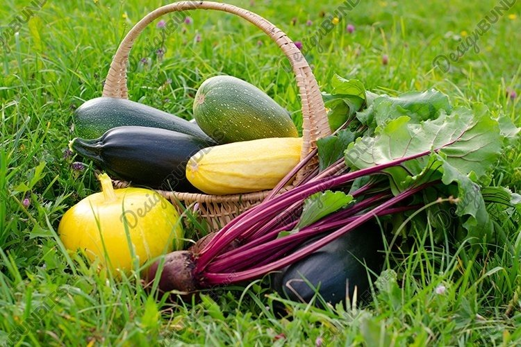 Harvest of zucchini and yellow pumpkin placed in a basket. example image 1