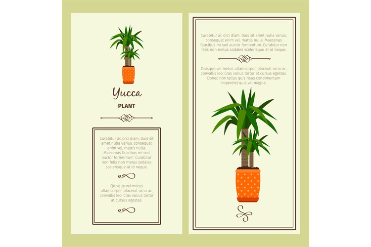 Greeting card with yucca plant example image 1