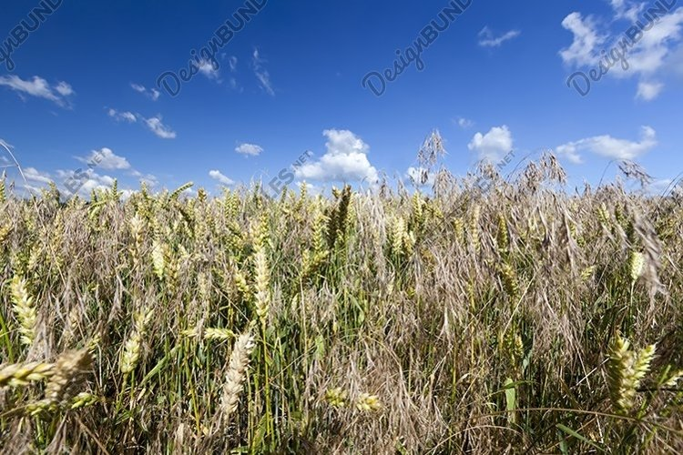 part of an agricultural field example image 1