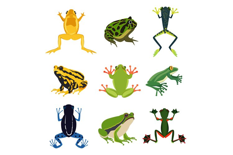 Exotic amphibian set. Different frogs in cartoon style. Gree example image 1