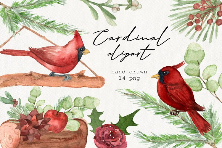 Watercolor cardinal clipart, Winter clipart, Merry christmas