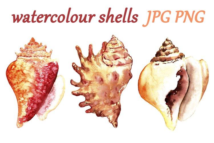 Seashells Watercolor Clip Art Isolated