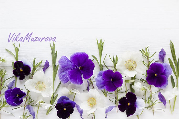 Floral frames with beautiful purple and pink flowers