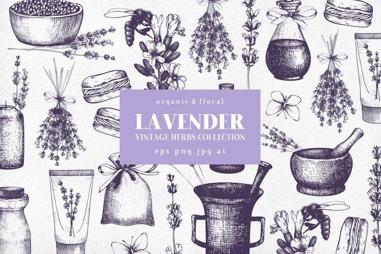 Hand Drawn Lavender Illustrations