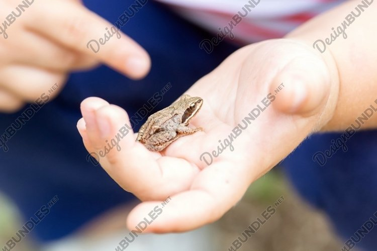 a child holds a small frog in his hands example image 1