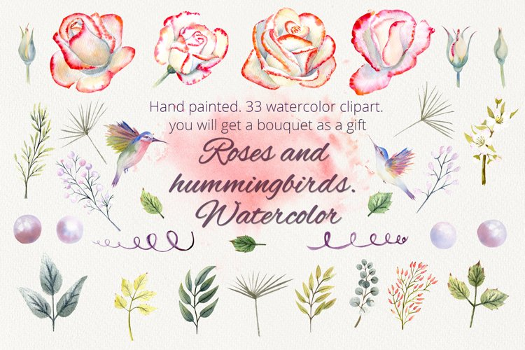 Roses and hummingbirds. Watercolor clipart