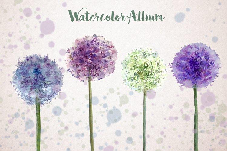 Watercolor Allium Clip Art Set example image 1