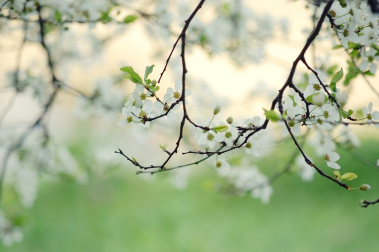 Spring Photography, Green Tree