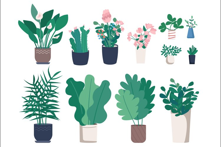 Different houseplants flat color vector objects set example