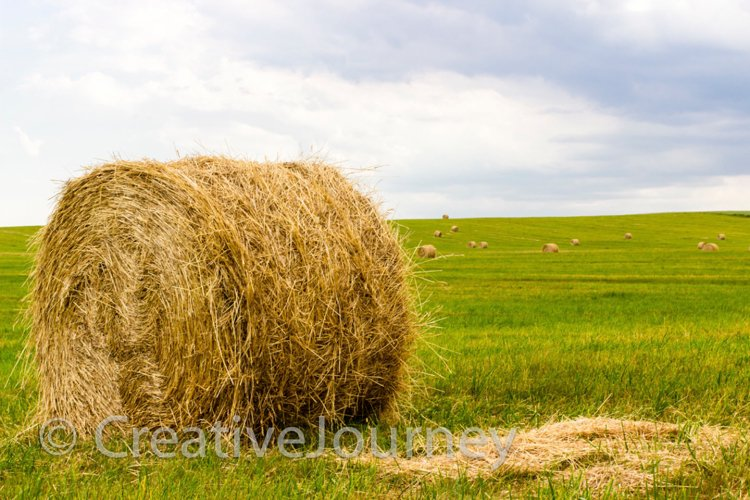 Hay bale on summer field. example image 1