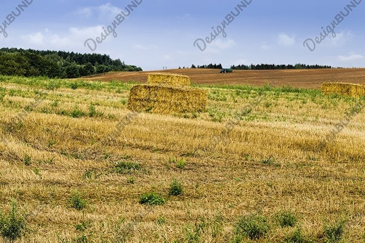 harvesting wheat example image 1