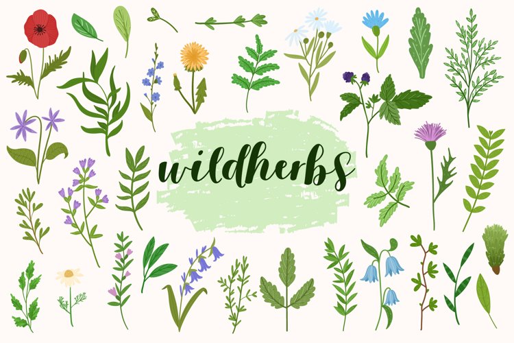 Wildherbs vector bundle
