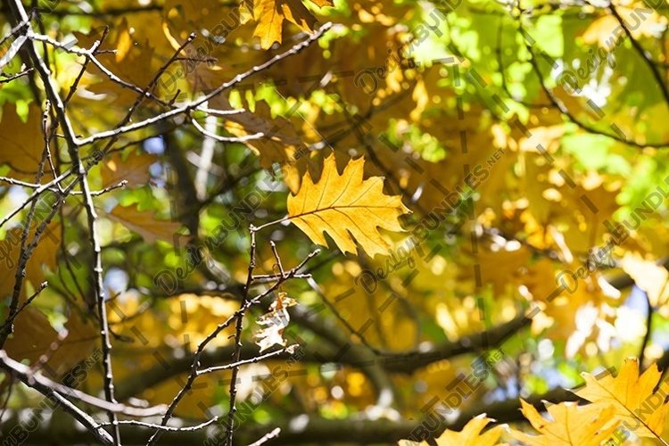 10 photos of bright autumn in forests parks and other places example image 1