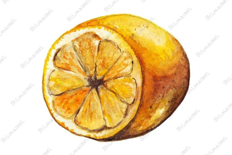 Watercolor lemon citrus yellow exotic fruit vector isolated