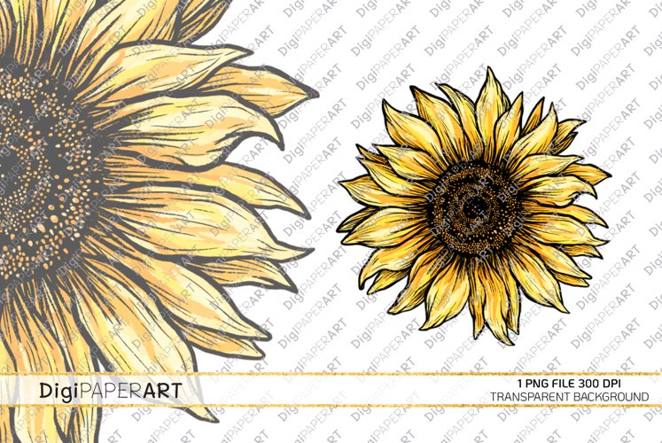 Sunflower PNG, Sunflower Sublimation design, Fall Clipart