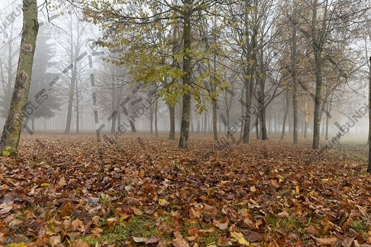 10 photos of the end of autumn example image 1