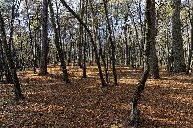 trees in the autumn season example image 1