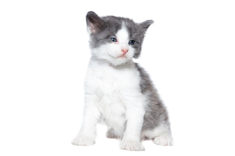 Kitten on a white background example image 1